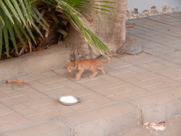 chat Egypte