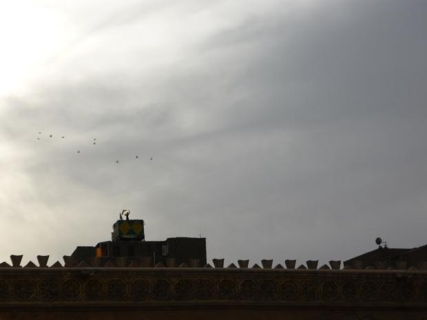 dresseur de pigeons