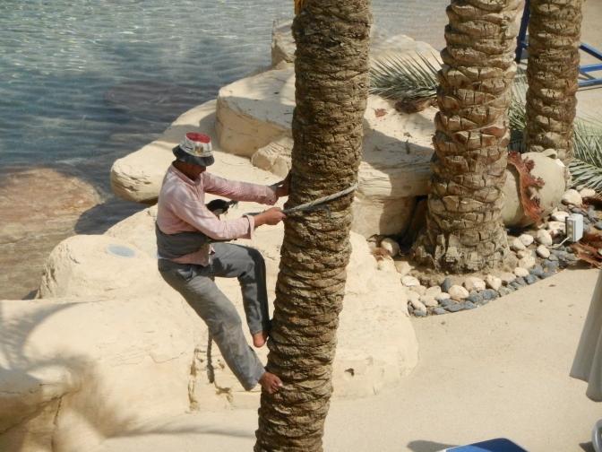 tailleur de palmier