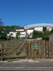 vigne municipale de Rueil