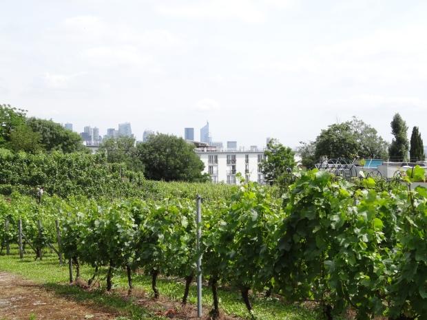 Vigne de Suresnes