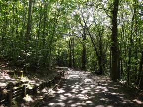 forêt Rueil Cucufa